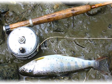 060601fishing3.jpg