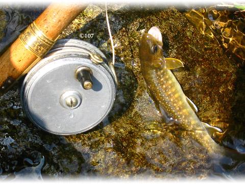 070427fishing2.jpg