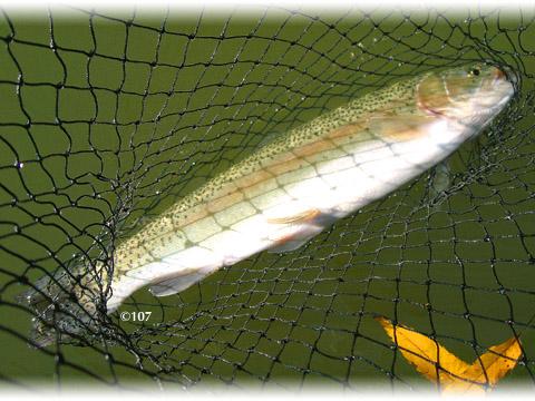 071109fishing3.jpg