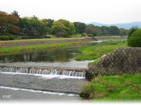081105kamogawa2.jpg