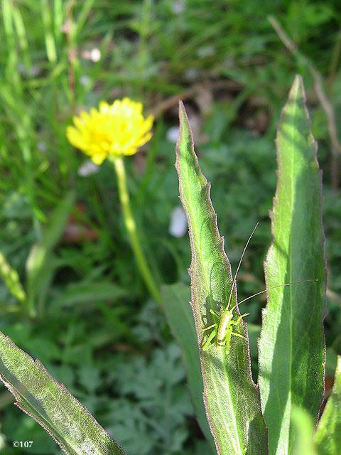 090405grasshopper.jpg