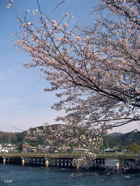 090405sakura1.jpg
