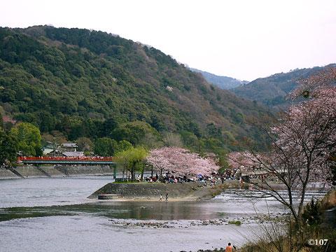 090405sakura2.jpg