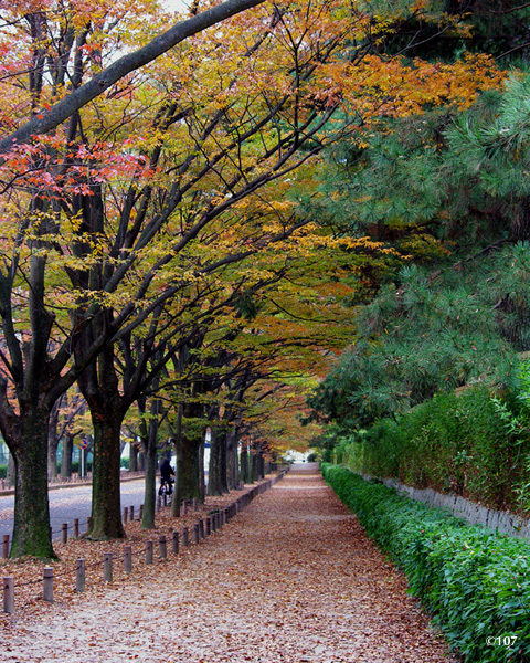 091112kamo_road.jpg